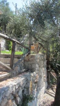Oliventrærne i hagen Casa di Veroli