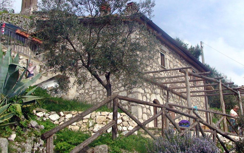 Oliventrær, blomster og krydderurter