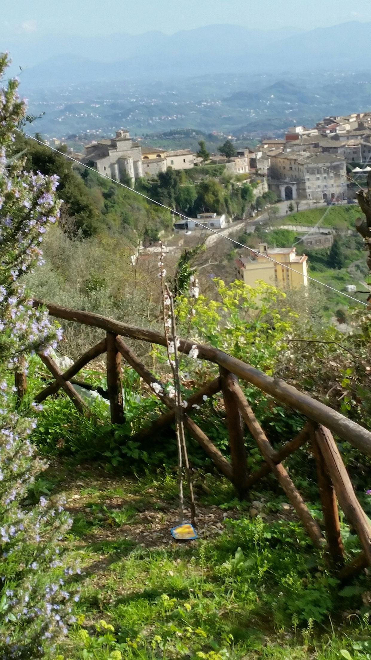 Frodig hage med trær og blomster
